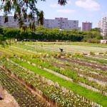 Vyhlásenie Vzdoru – strany práce ku kauze nakazeného mäsa z Brazílie: Odpoveďou musí byť budovanie potravinovej sebestačnosti Slovenska